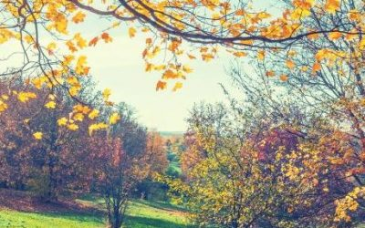 Fall Lawn Care for a Great Yard in the Spring